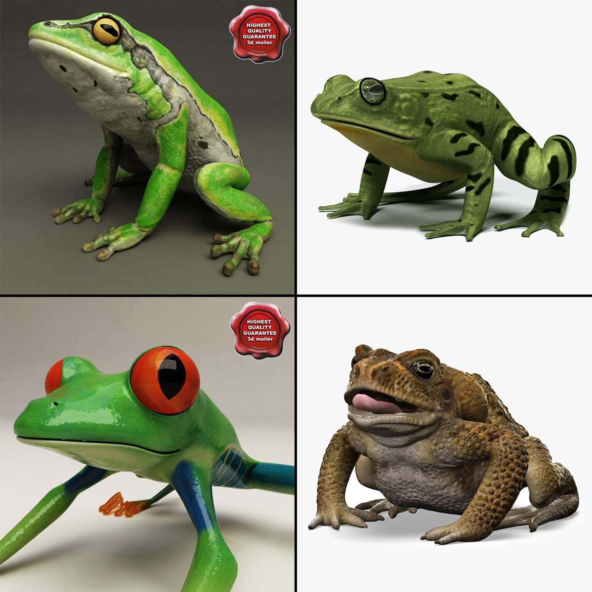 Frogs_Collection_V3_000.jpg