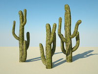 3d model desert cactus