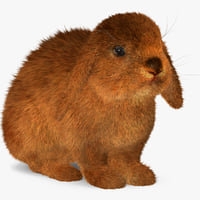 3d rabbit red fur