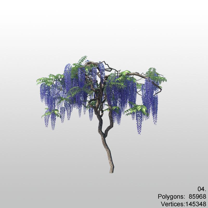 wisteria04_1.jpg