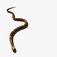 garter snake max