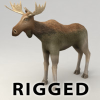 Moose rigged