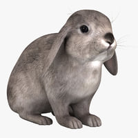 Rabbit Grey