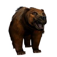 Bear_PTH
