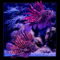 3d fish model