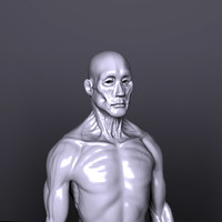 anatomy muscles 3d model