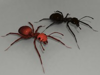 ants 3d model