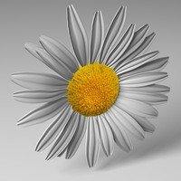 3d model daisy flower