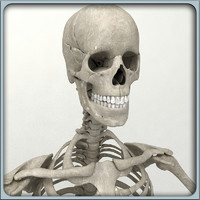 3ds max human skeleton