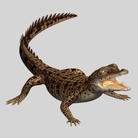 3d baby crocodile