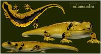 salamandra salamanders 3d obj
