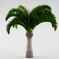 Palm_05