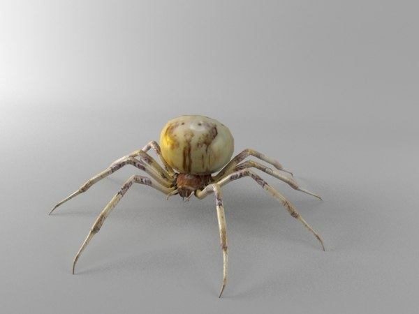 3d model orb spider shamrock - Shamrock Spider... by ImmortalSoul