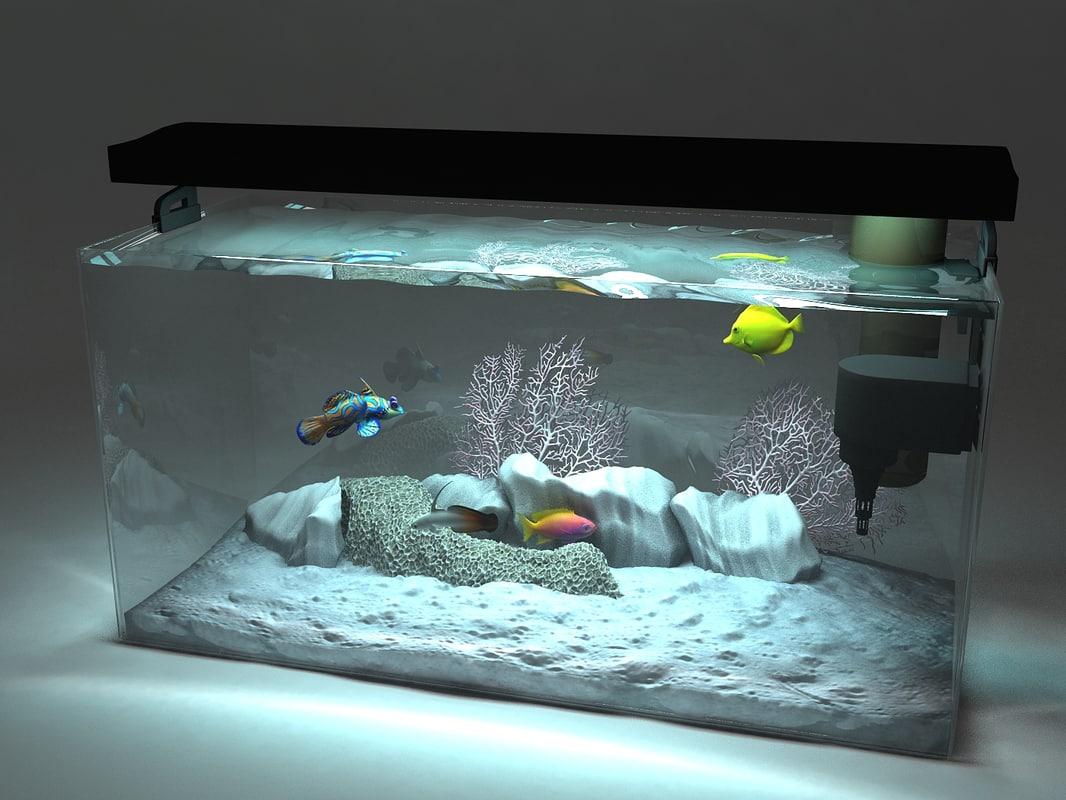 aquarium_cam4C.jpg