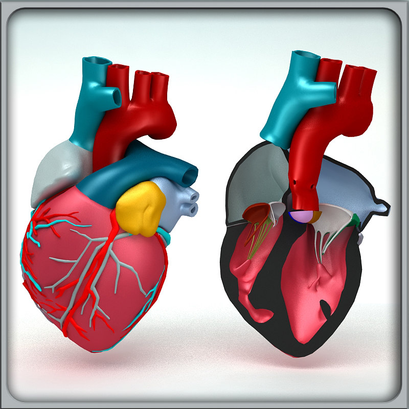 hearts_render_00.jpg