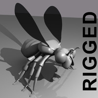 3d rigged insect model