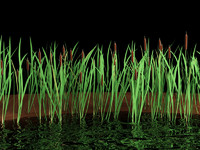 3d typha bulrush cattail model