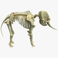 3d model asian elephant skeleton