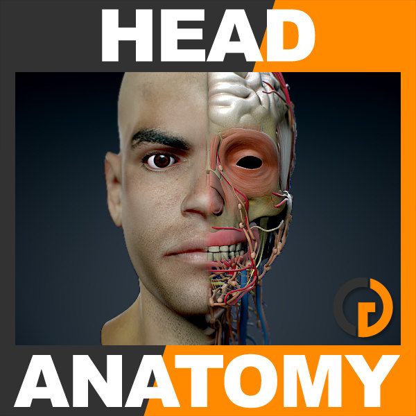 HeadAnatomy_th001.jpg