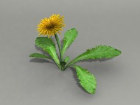 3ds max flower dandelion