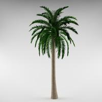 Palm_01