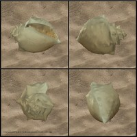sea seashell shell 3d obj