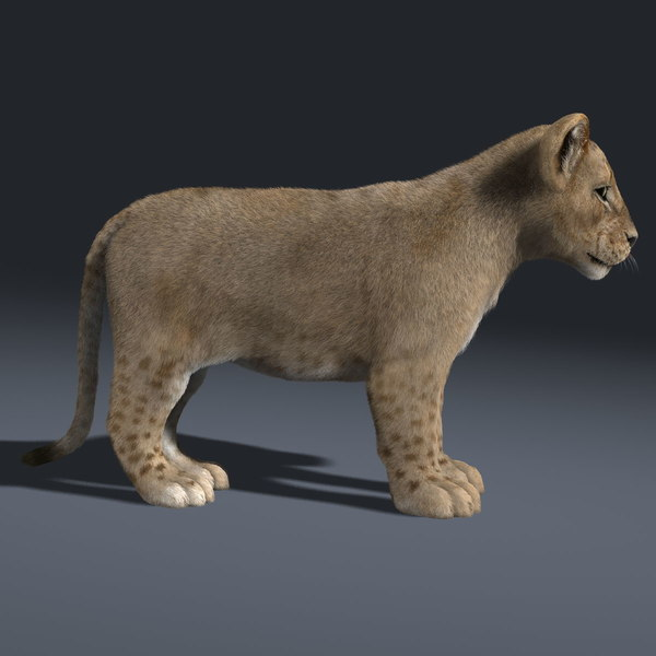 3d lion cub fur model - Lion & Cub (FUR)... by Massimo Righi