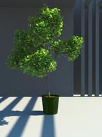 3d model plant leaves
