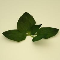 plantain grass plant 3d model