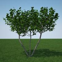 flowers tree 3d model