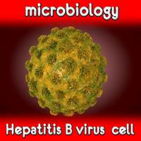 Virus Hepatitis B