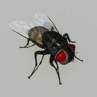 3d model of house fly