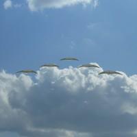 crescent formation 3d model