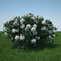 hydrangea arborescens 3d c4d