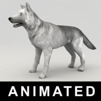 3d model of rigged wolf