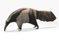 3ds max giant anteater