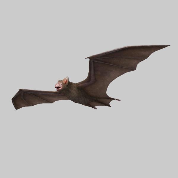vampire_bat 1.jpg