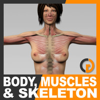 Human Female Body, Muscular System and Skeleton - Anatomy