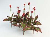 3dsmax canna flower