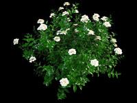 max gardenia garden flower