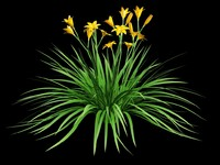 3d max daylily hemerocallis
