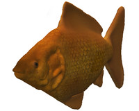 3d model fish goldfish