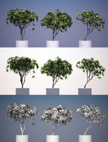 max kamboja tree 3 modeled
