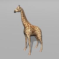 giraffe uv max