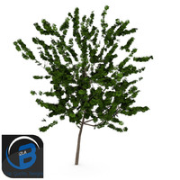 3d tree leaf model