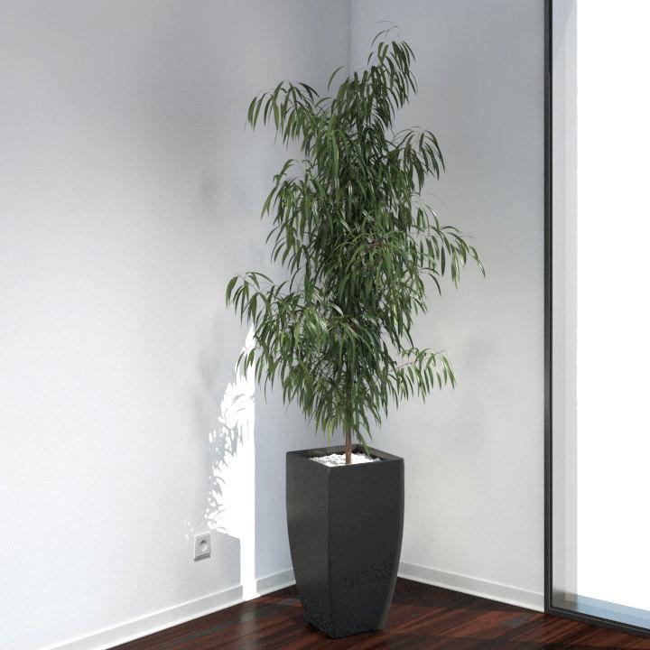 VP-Oleander-FEATURE-IMAGE.jpg