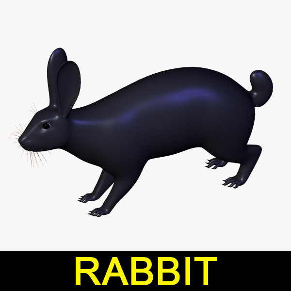 rabbit_anatomy_leo3dmodels_00.jpg