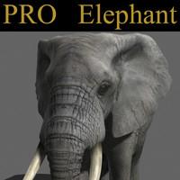 PRO Elephant