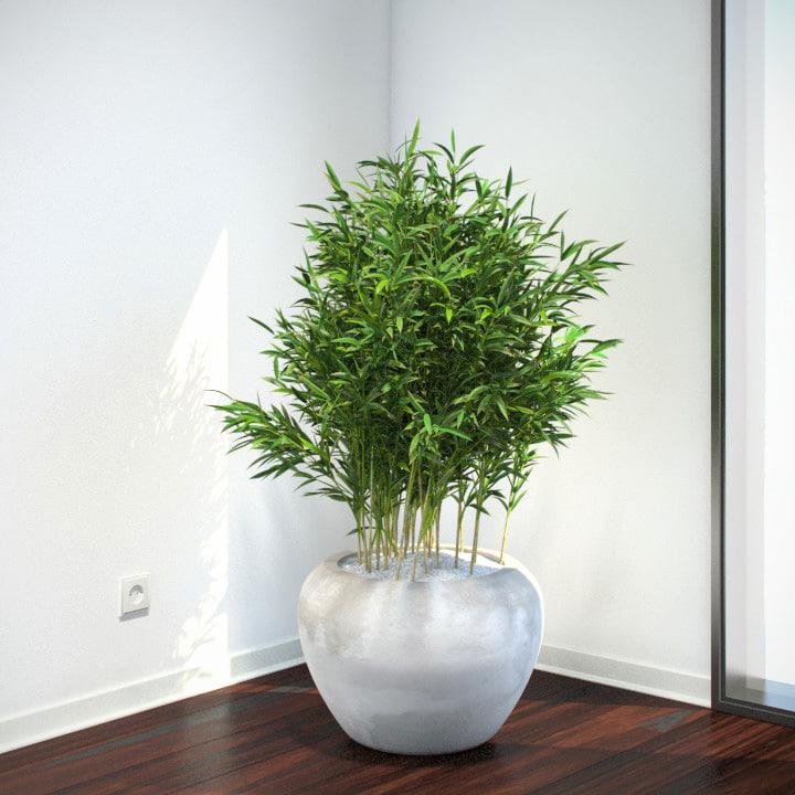 VP-Bambus-Muriel-FEATURE-IMAGE.jpg