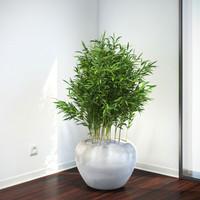 bambus muriel max